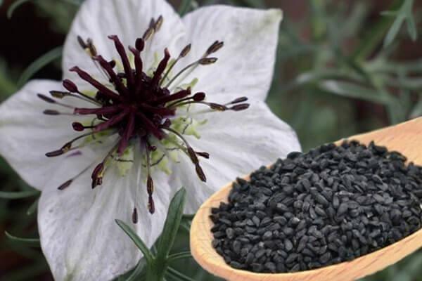 Herbs For Kidney Disease May Help Prevent Acute Kidney Injury Hospitalizations
