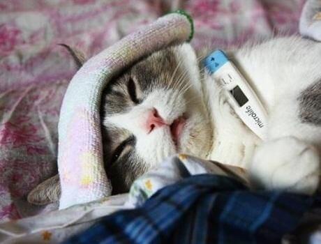 Decoding Kidney Disease in Cats