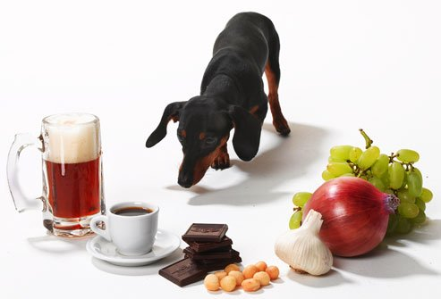 The Toxins That Could Poison Your Dog's Kidneys Are Literally All Around You