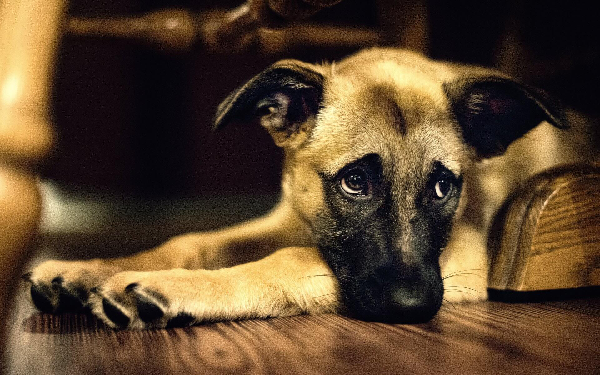 The Truth About CKD In Dogs And What You Can Do To Help Your Pet