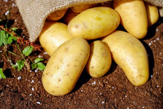 A Potato A Day Could Keep Kidney Disease At Bay?