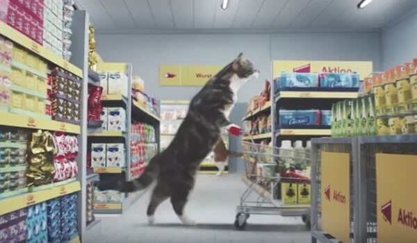Commercial Kidney Cat Food, Top Contenders To Help CKD in Cats